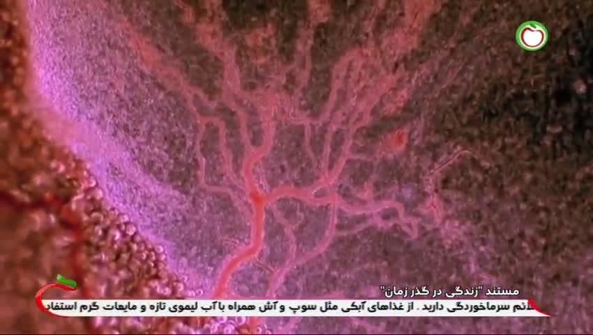 مستند زندگی در گذر زمان / 9 خرداد