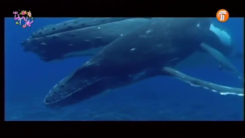 مستند 7 / اقیانوس پیما / 13 تیر